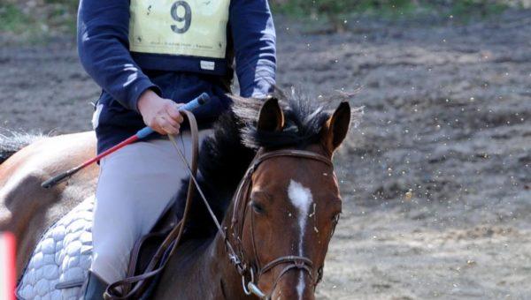 Saumur jeunes chevaux : à Pierre-Marie Dubois les 6 ans