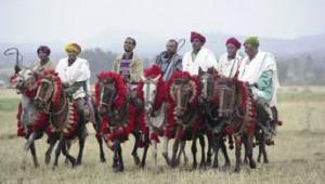 Les chevaux d'Abyssinie au Haras national de Compiègne