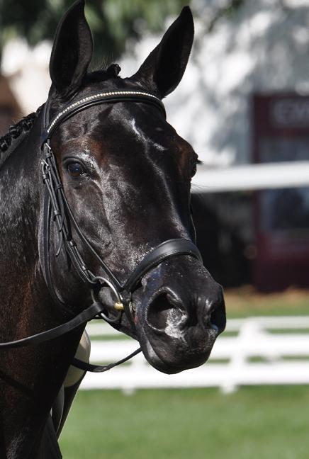 Zidante Championne du Monde des chevaux de 7 ans
