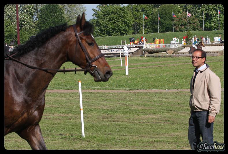 Ramsa Villa Rose : un cheval aimé et doué