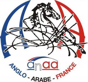 Formations des juges Anglo-Arabe