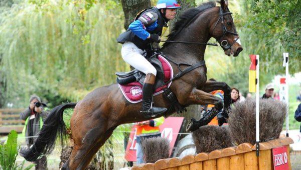 Lanacan : le petit cheval au grand cœur !