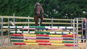 Un nouveau cheval pour Donatien Schauly