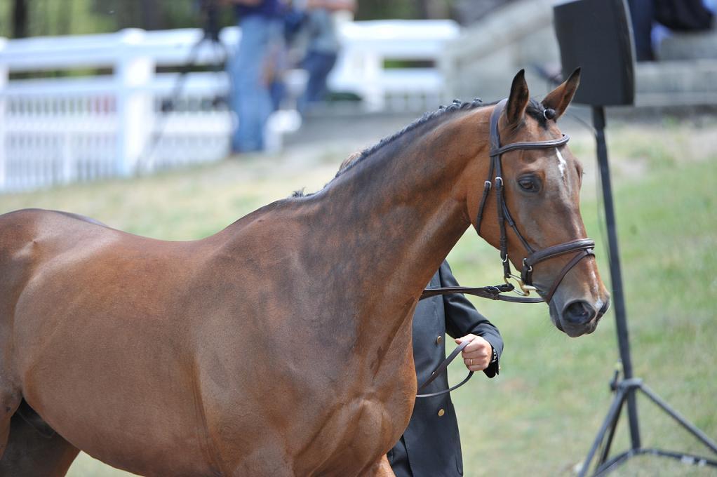 Les astuces de Julie Vigeanel : Garder son cheval en bon état