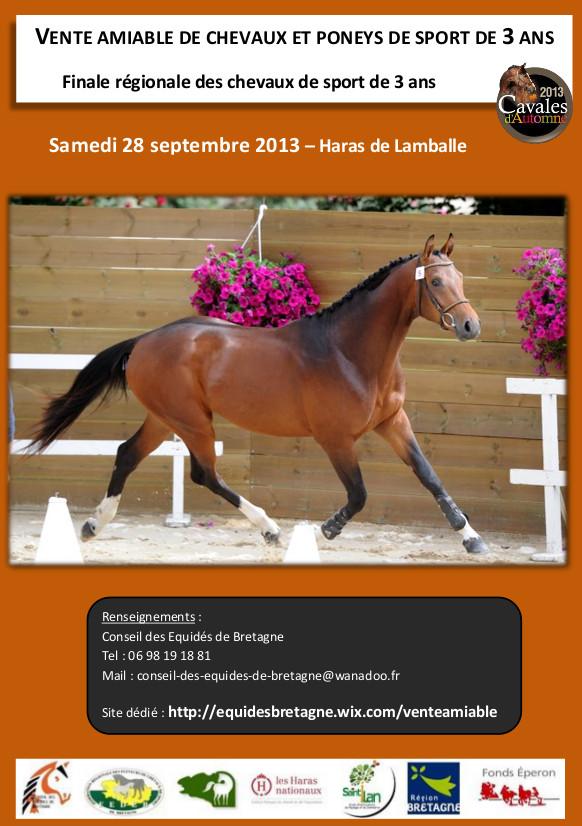 Vente amiable de jeunes chevaux et poneys de sport de 3 ans en Bretagne