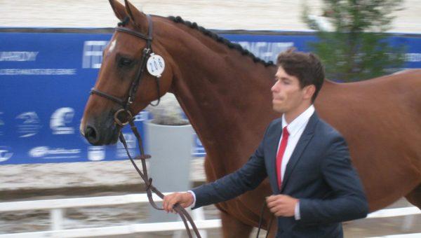 Alexis Gomez : de nouveaux chevaux pour 2014