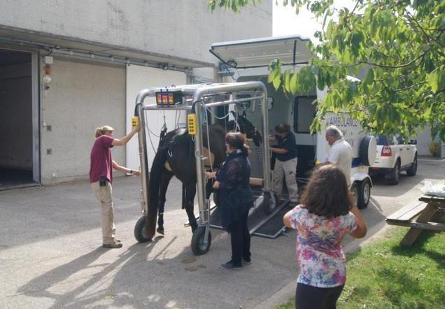 ambulance-cheval