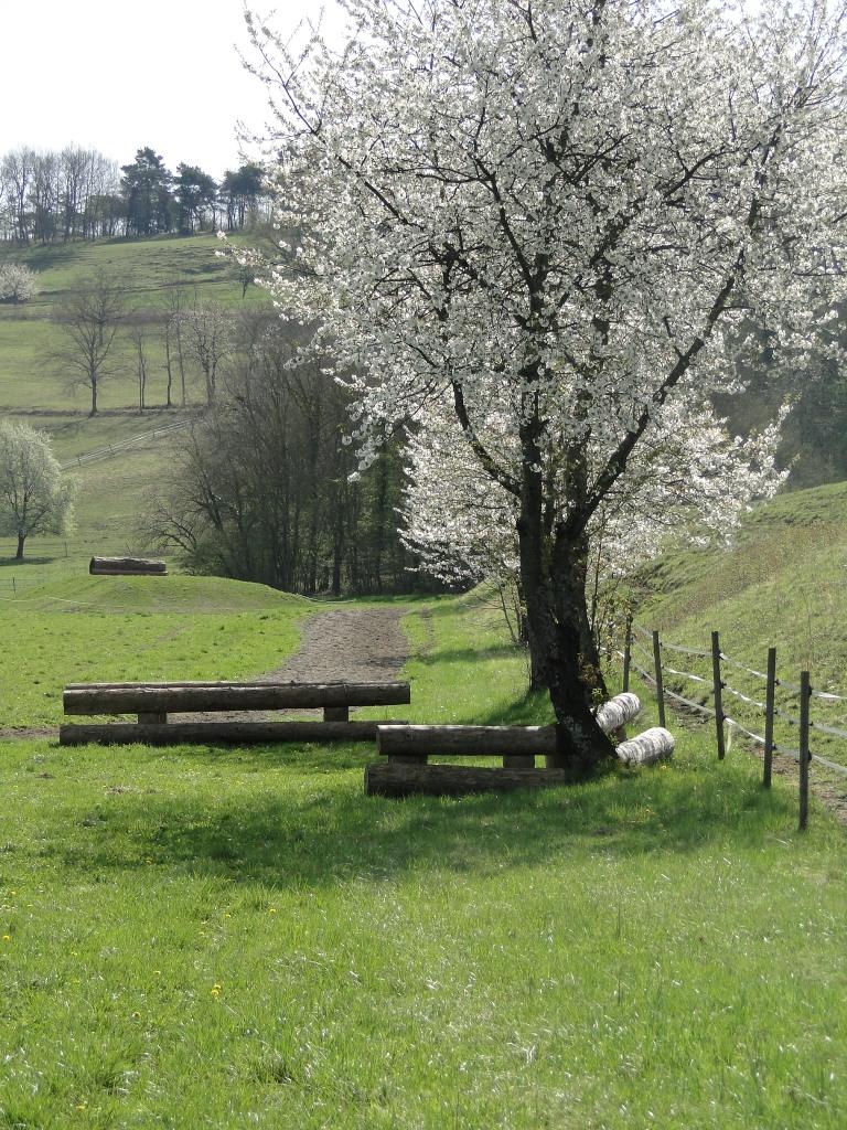 cerisiers directionnel oxer piste galop