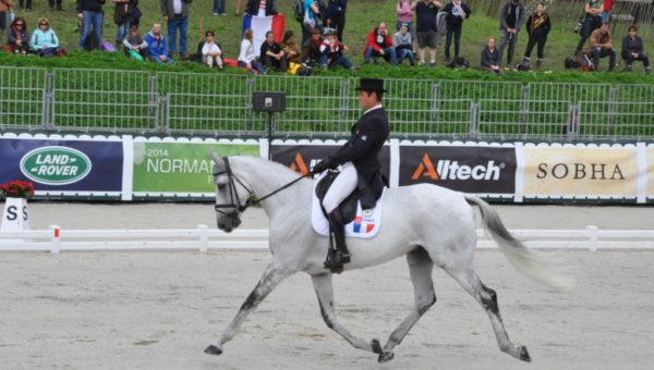 Les chevaux de Cédric Lyard
