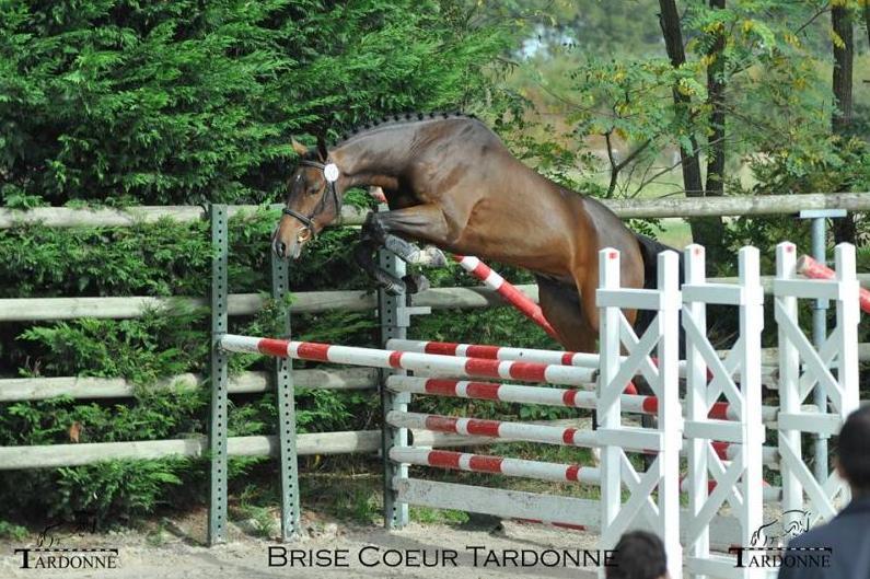 Brise Coeur Tardonne (photo Elevage de Tardonne)