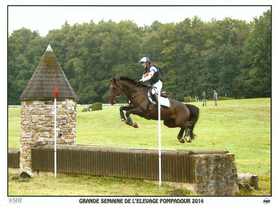 Fontainebleau : Ultimo d'Oline meilleur 7 ans
