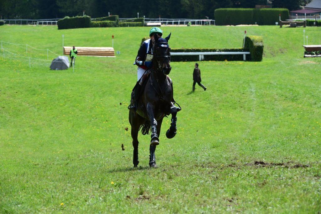 3 nouveaux chevaux dans le groupe JO/JEM