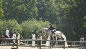 Journées : la détente du cheval sur les trois tests