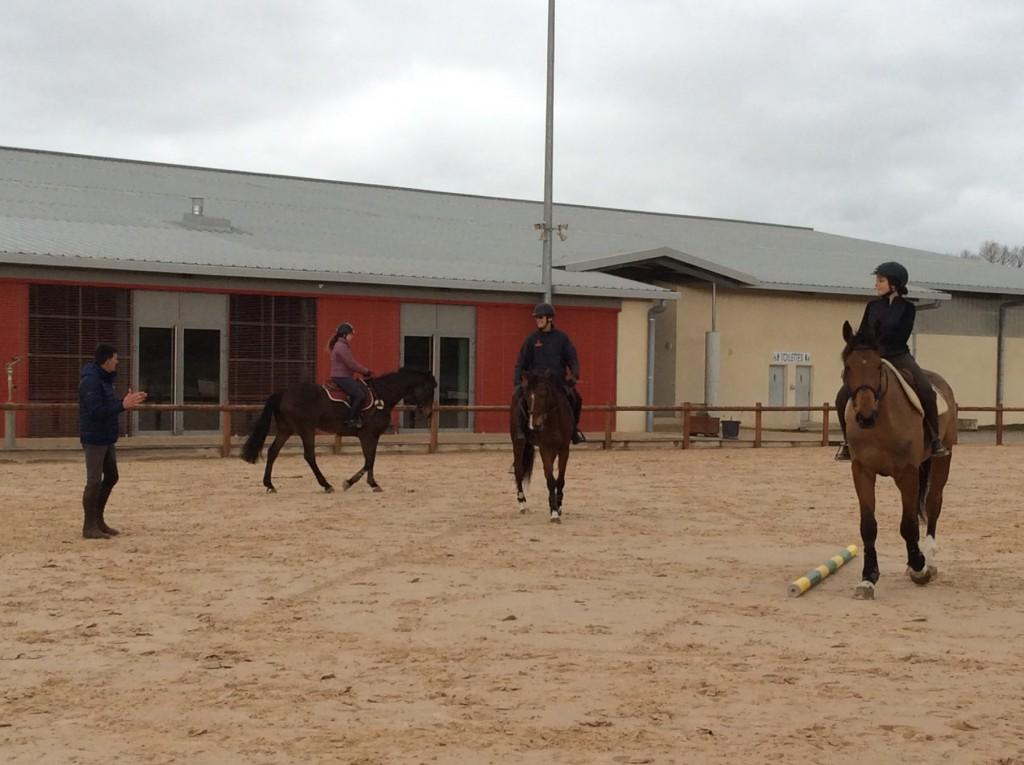 Les stages SHF font le bonheur des jeunes chevaux