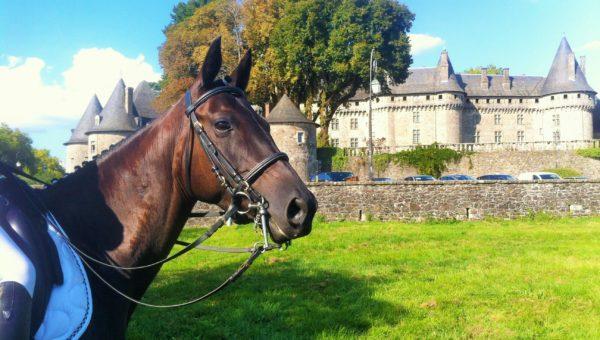 Premier cheval vendu grâce à France Complet !