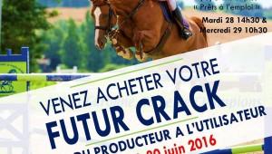 Ventes de Nerac : chevaux «prêts à l'emploi»