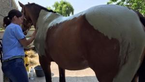 De la physio-massothérapie pour vos chevaux, au tarif adhérent
