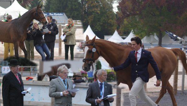 Journées : l'inspection des chevaux