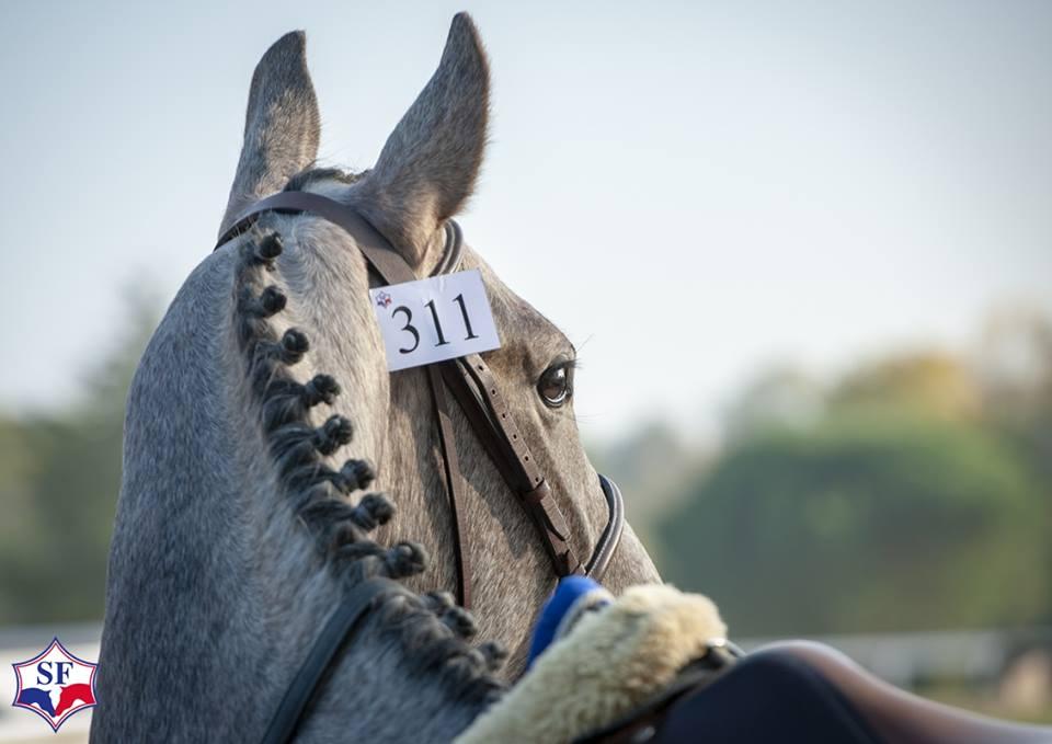 Journées du Complet : Horse Dating (Eleveurs / Cavaliers / Propriétaires)