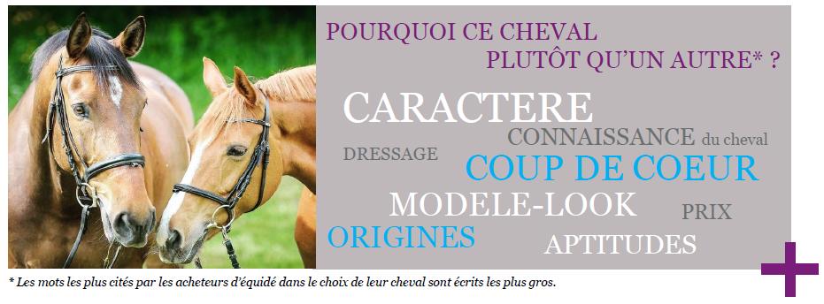9% des ventes de chevaux en France concernent le Complet