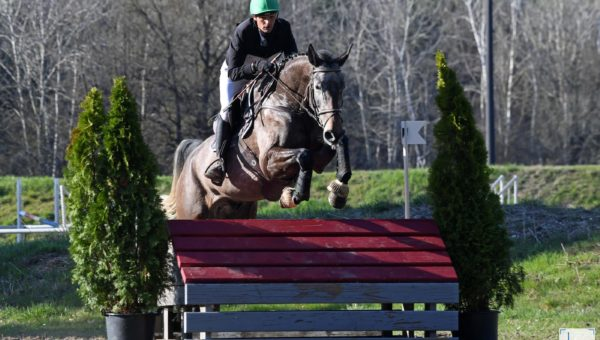 Nicolas Touzaint a fait le plein de jeunes chevaux cet hiver !