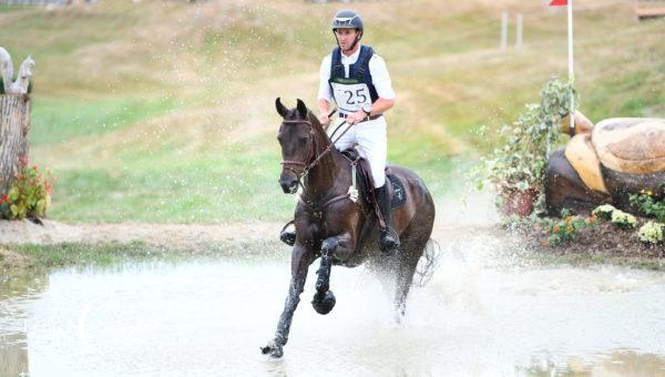 Record de jeunes chevaux au Lion d'Angers !